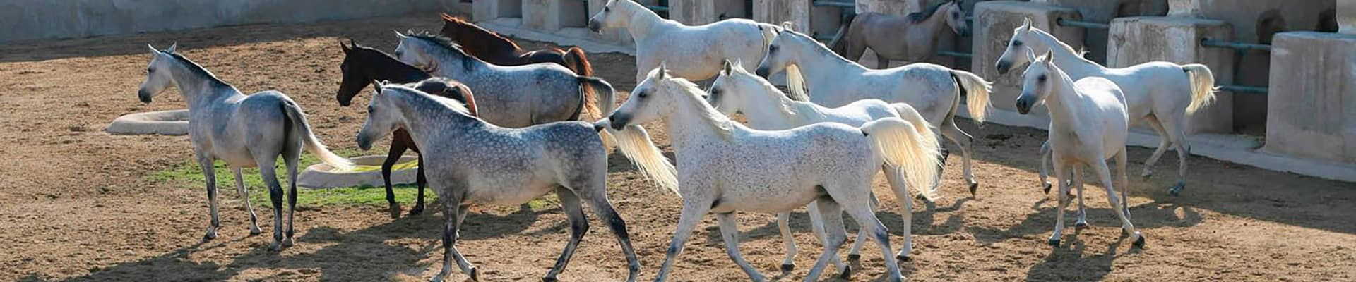 Al Shaqab Equestrian Cenre